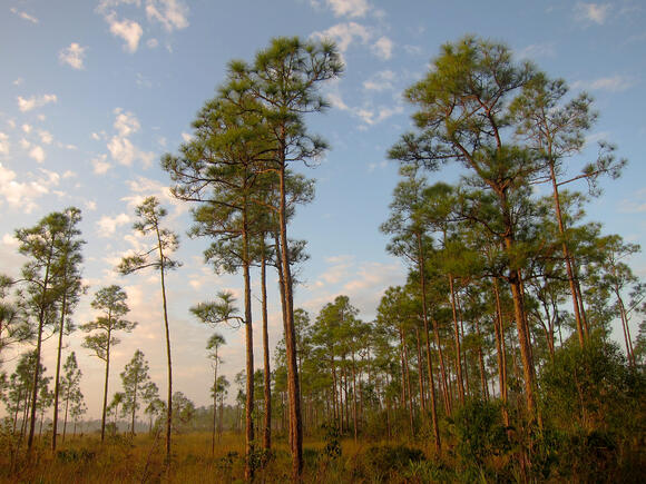 family-friendly-activities-in-central-florida-neighborhood-bellalag-nature-trails
